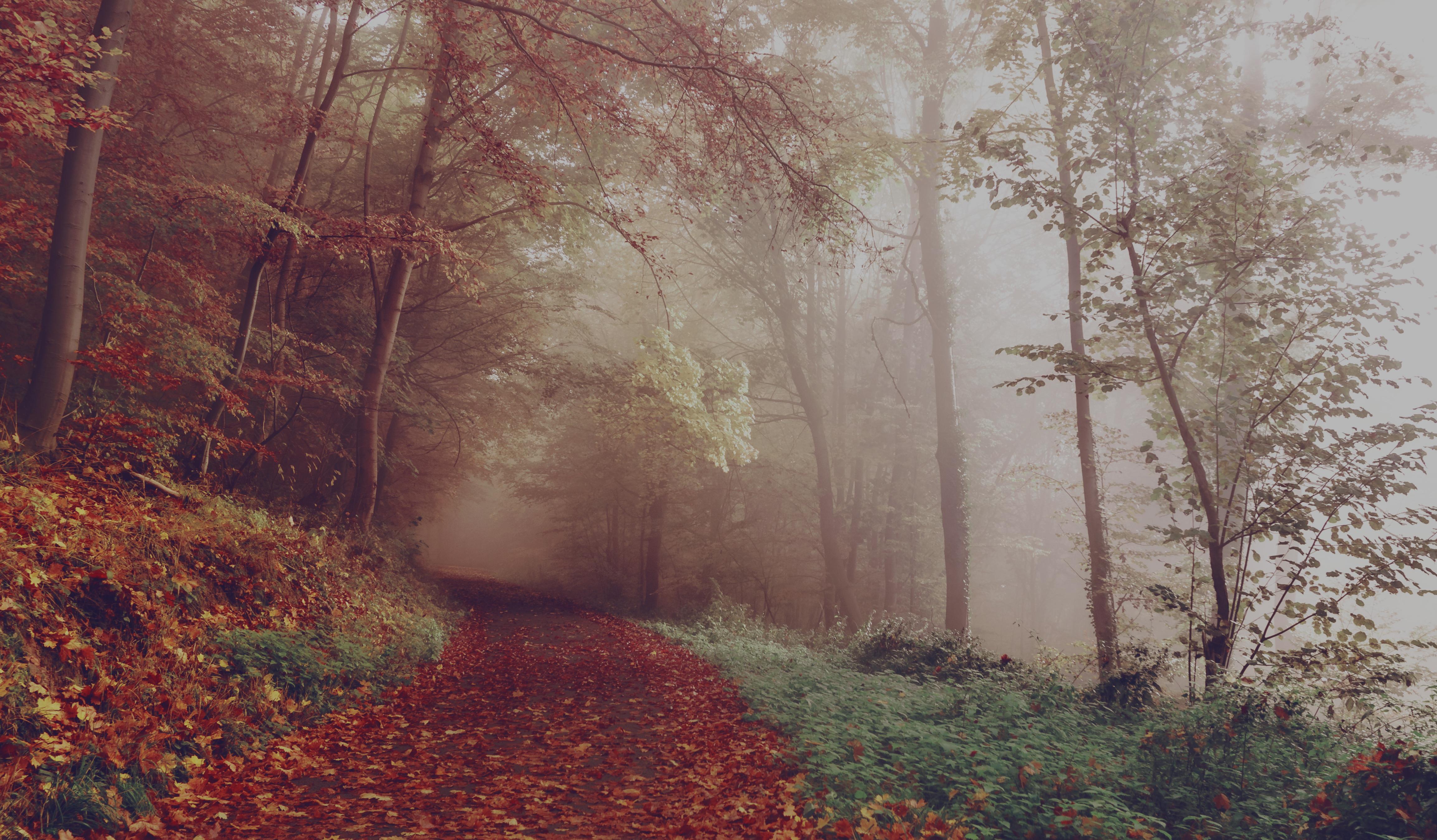 Gyönyörű környezetben